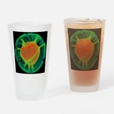 Mantle convection, 3-D computer mod Drinking Glass