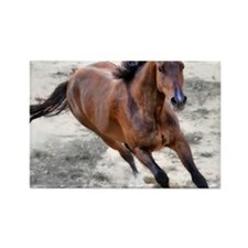 Warmblood horse galloping. Rectangle Magnet
