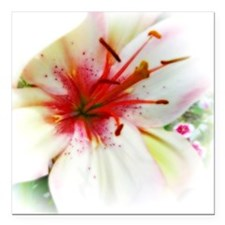 """Soft lily Square Car Magnet 3"""" x 3"""""""