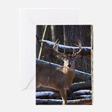 Trophy Whitetail Deer D1342-029 Greeting Card
