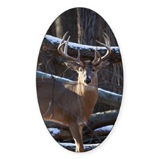 Trophy Whitetail Deer D1342-029 Decal