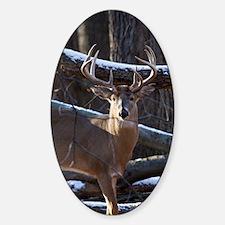 Trophy Whitetail Deer D1342-029 Sticker (Oval)