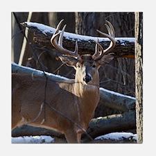 Trophy Whitetail Deer D1342-029 Tile Coaster