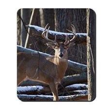 Trophy Whitetail Deer D1342-029 Mousepad
