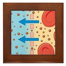 Cross section biomedical illustration  Framed Tile