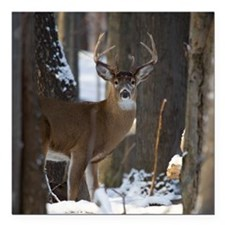 "Trophy Whitetail D1316-0 Square Car Magnet 3"" x 3"""