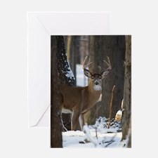 Trophy Whitetail D1316-014 Greeting Card