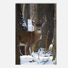 Trophy Whitetail D1316-01 Postcards (Package of 8)