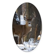 Trophy Whitetail D1316-014 Decal