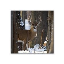 "Trophy Whitetail D1316-014 Square Sticker 3"" x 3"""