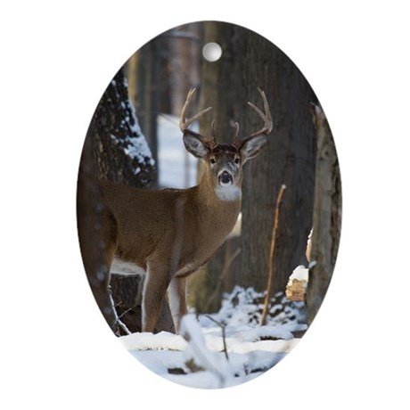 Trophy Whitetail D1316-014 Oval Ornament