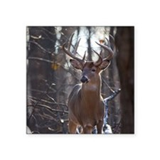 "Dominant Buck D1342-025 Square Sticker 3"" x 3"""
