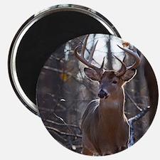 Dominant Buck D1342-025 Magnet