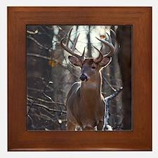 Dominant Buck D1342-025 Framed Tile
