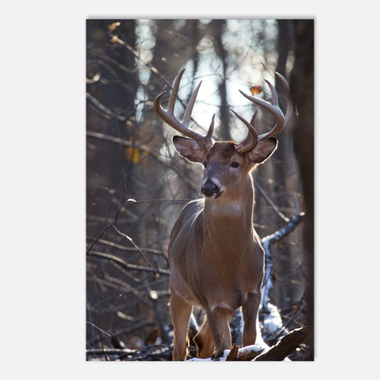 Dominant Buck D1342-025 Postcards (Package of 8)
