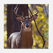 Buck Deer D1312-048 Tile Coaster