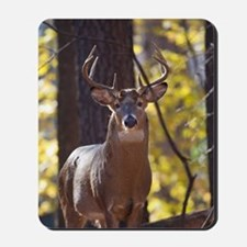 Buck Deer D1312-048 Mousepad