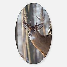 Buck Deer D1316-053 Sticker (Oval)