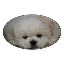 Pekingese Puppy Decal