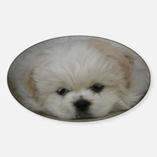 Pekingese Puppy Decal