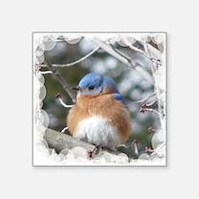 "bluebird eastern Square Sticker 3"" x 3"""