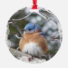 bluebird eastern Ornament