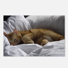 Afternoon Snooze Postcards (Package of 8)