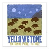 Yellowstone national park Square Car Magnets