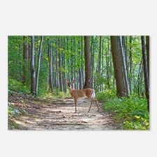 Doe in forest Postcards (Package of 8)