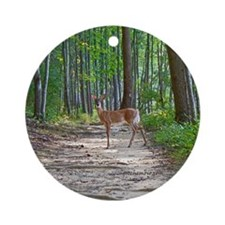 Beautiful doe in forest Round Ornament