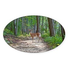 Beautiful doe in forest Decal