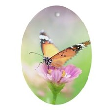 Colourful butterfly on zinnia flower Oval Ornament
