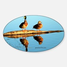 Ducks at sunset Sticker (Oval)