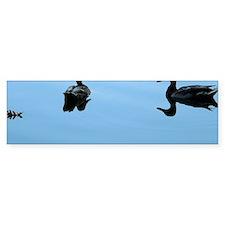 Duck romance Bumper Sticker
