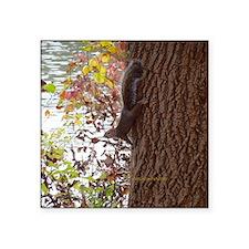 """Squirrel Square Sticker 3"""" x 3"""""""
