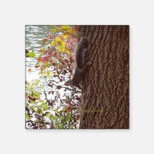 "Squirrel Square Sticker 3"" x 3"""