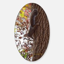 Squirrel Sticker (Oval)