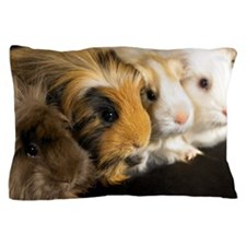 Four guinea pigs sitting in a line, cl Pillow Case