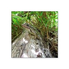 """Frog on a log Square Sticker 3"""" x 3"""""""