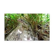 Frog on a log Rectangle Car Magnet