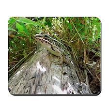 Frog on a log Mousepad