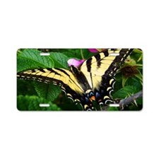 Resting Swallowtail Butterf Aluminum License Plate