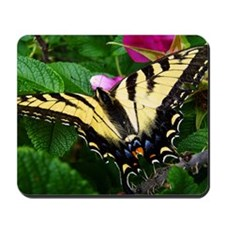 Resting Swallowtail Butterfly Mousepad
