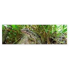 Frog on a log Bumper Sticker