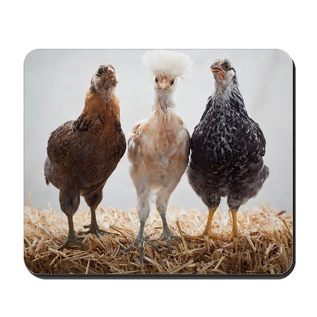 Portrait of Three Pet Chickens Mousepad