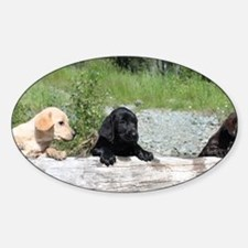 3 Lab pups Sticker (Oval)