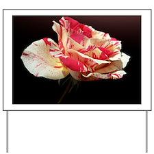 Rose on black background Yard Sign