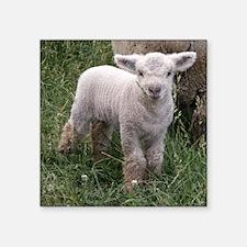 "Cute Babydoll Lamb Square Sticker 3"" x 3"""