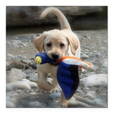 """Yellow Lab puppy Square Car Magnet 3"""" x 3"""""""