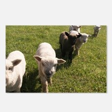 Friendly Lambs Postcards (Package of 8)